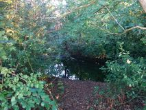 Trou dans les buissons Photos libres de droits