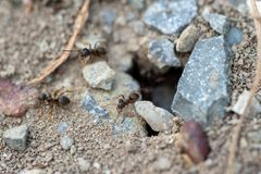 Trou de colonie de fourmi image stock