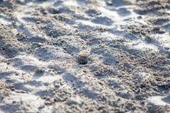 Trou de creusement de crabe de Ghost dans le sable Photographie stock libre de droits