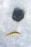 Trou de glace et poissons de perche Image libre de droits
