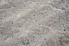 Trou de sable de crabe Images libres de droits