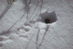 Trou de souris en hiver avec la neige avec des traces devant l'entrée images stock