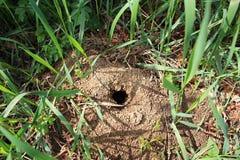 Trou de taupe dans la terre Image libre de droits