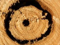 Trou de texture d'arbre de chêne Photographie stock libre de droits