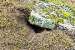 Trou de tirailleur sur le bâti sous la pierre et la mousse Image stock