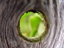 Trou en bois Image libre de droits