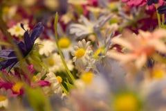 Trouble doux abstrait de la fleur et du fond coloré image libre de droits