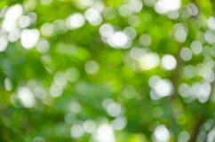 Trouble doux, fond de bokeh de photographie de vert Photo stock