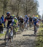 The Peloton in The Forest of Arenberg- Paris Roubaix 2015 Stock Photography