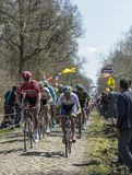 The Peloton in The Forest of Arenberg- Paris Roubaix 2015 Royalty Free Stock Images