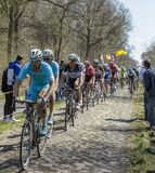 The Peloton in The Forest of Arenberg- Paris Roubaix 2015 Royalty Free Stock Image