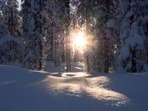 Trought το δάσος Στοκ φωτογραφία με δικαίωμα ελεύθερης χρήσης
