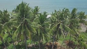 Trought Palms Tropics Aerial 4k. 4k aerial footage of palms and ocean in the back stock footage