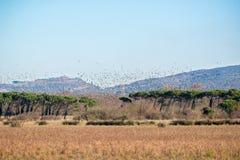 Troupeau énorme de canard images libres de droits
