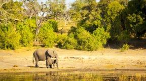 Troupeau Afrique d'éléphant photos stock