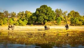 Troupeau Afrique d'éléphant image libre de droits