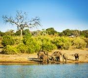 Troupeau Afrique d'éléphant photos libres de droits