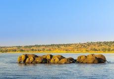 Troupeau Afrique d'éléphant image stock