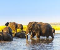 Troupeau Afrique d'éléphant photographie stock libre de droits