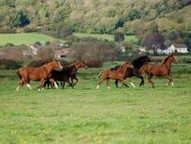 Troupeau courant de cheval Photos libres de droits