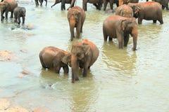 Troupeau d'éléphant photos stock