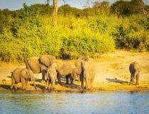 Troupeau d'éléphant au bord de rivières images stock