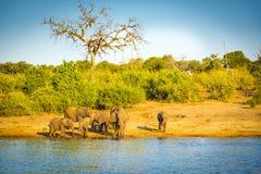 Troupeau d'éléphant au bord de rivières image libre de droits