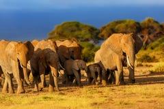 Troupeau d'éléphant au lever de soleil Image stock