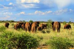Troupeau d'éléphant marchant loin Photographie stock libre de droits
