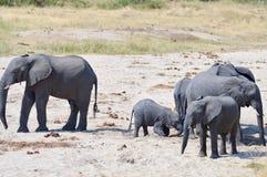 Troupeau d'éléphants recherchant un point d'eau en parc de Tarangire images stock