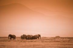 Troupeau d'éléphants sur la savane africaine Images stock