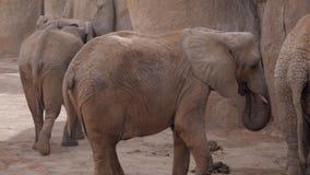 Troupeau d'éléphants un zoo outre de Valence Espagne banque de vidéos