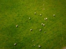 Troupeau d'antenne de moutons Image stock