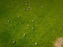 Troupeau d'antenne de moutons Images libres de droits