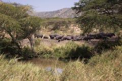 Troupeau d'hippopotame sur les banques d'une rivière dans le Serengeti Image stock