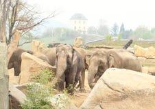 Troupeau d'éléphants Photographie stock libre de droits