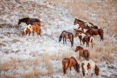 Troupeau dans les collines couvertes de neige Photographie stock libre de droits