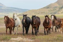 Troupeau de beaux chevaux sauvages en été photo stock