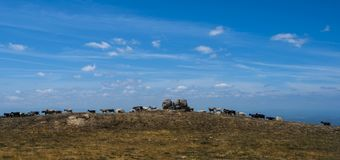 Troupeau de chèvres sur une gamme de montagne, estrela du DA de serra, Portugal images libres de droits