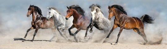 Troupeau de cheval élevé en plein air Photographie stock libre de droits