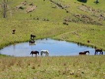 Troupeau de cheval Photo stock