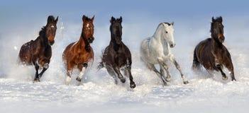Troupeau de cheval dans la neige Images stock