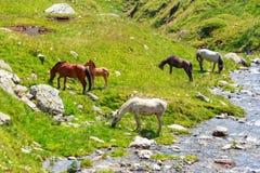 Troupeau de cheval sur le pâturage Photographie stock libre de droits