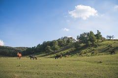 Troupeau de cheval sur le pâturage vert Photos libres de droits