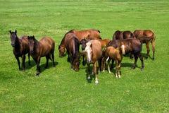 Troupeau de chevaux photos stock