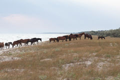 Troupeau de chevaux Photos libres de droits
