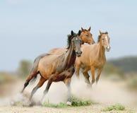 Troupeau de chevaux Image stock