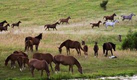 Troupeau de chevaux Photo libre de droits