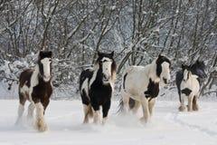 Troupeau de chevaux courants Images stock