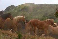 Troupeau de chevaux courants dans la lumière de début de la matinée photo stock